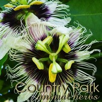 Country Park Passion Flower 1kg
