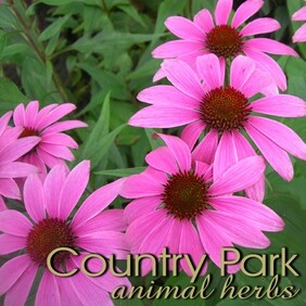 Country Park Echinacea 1kg