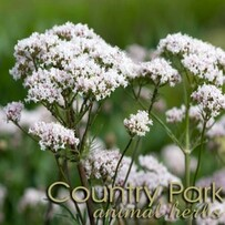 Country Park Valerian Root Cut 1kg